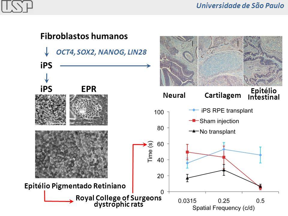 Fibroblastos humanos iPS OCT4, SOX2, NANOG, LIN28 EPR Epitélio Pigmentado Retiniano NeuralCartilagem Epitélio Intestinal Royal College of Surgeons dys