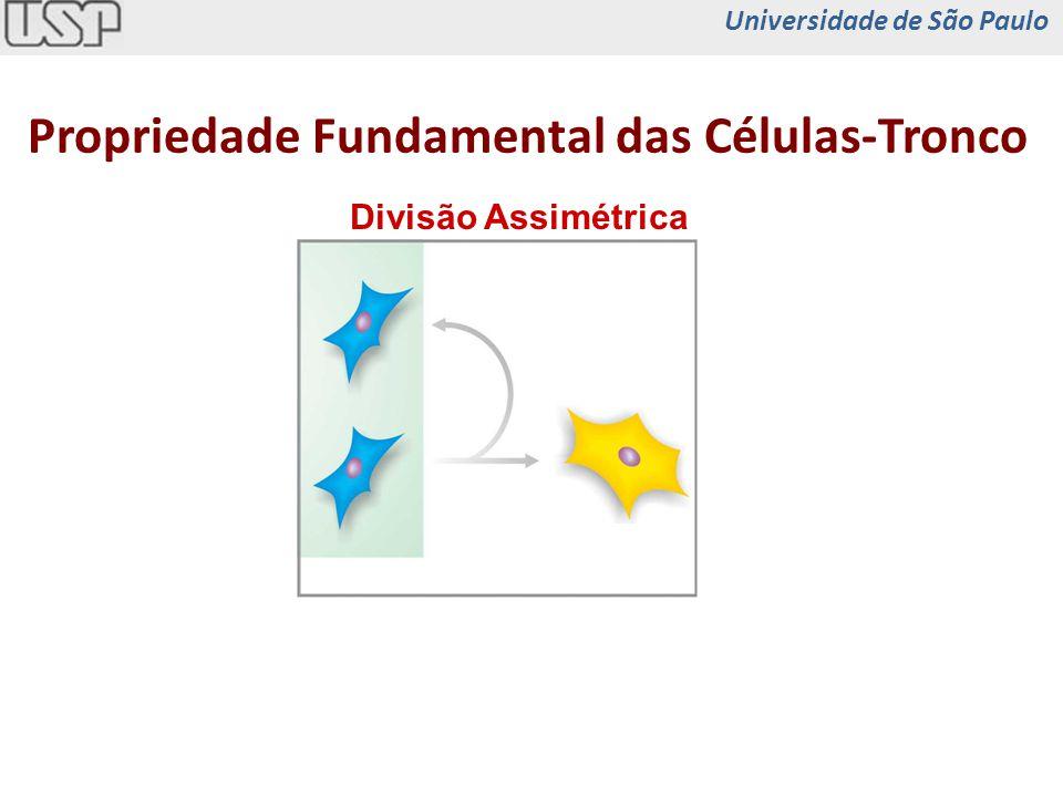 Propriedade Fundamental das Células-Tronco Divisão Assimétrica Universidade de São Paulo