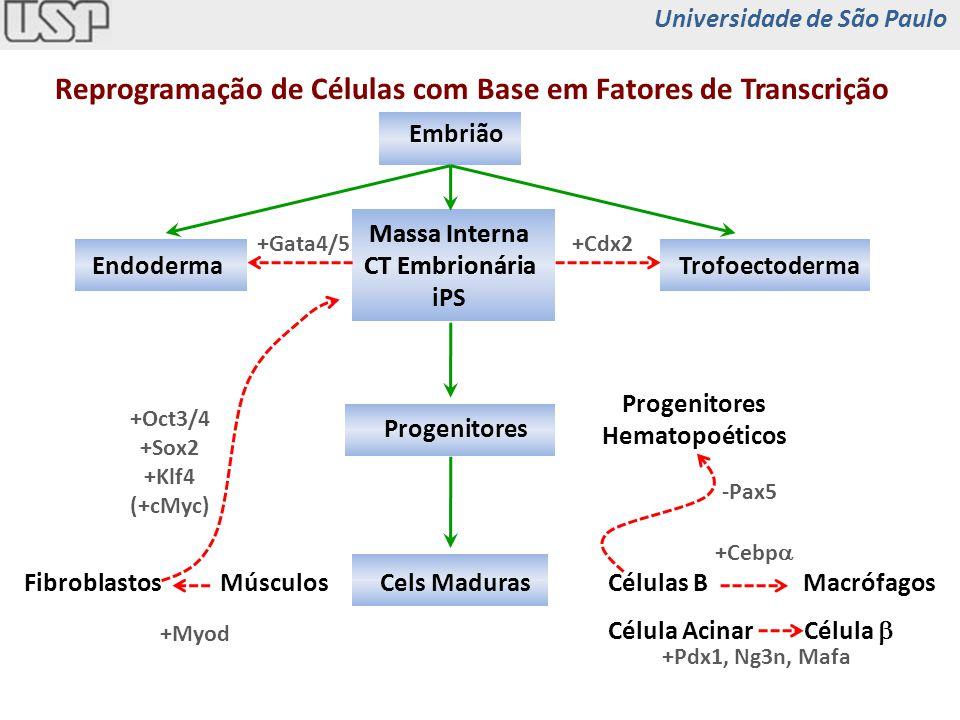 TrofoectodermaEndoderma Progenitores Cels Maduras Embrião +Gata4/5+Cdx2 Células BMacrófagos +Cebp Célula Acinar Célula +Pdx1, Ng3n, Mafa MúsculosFibro