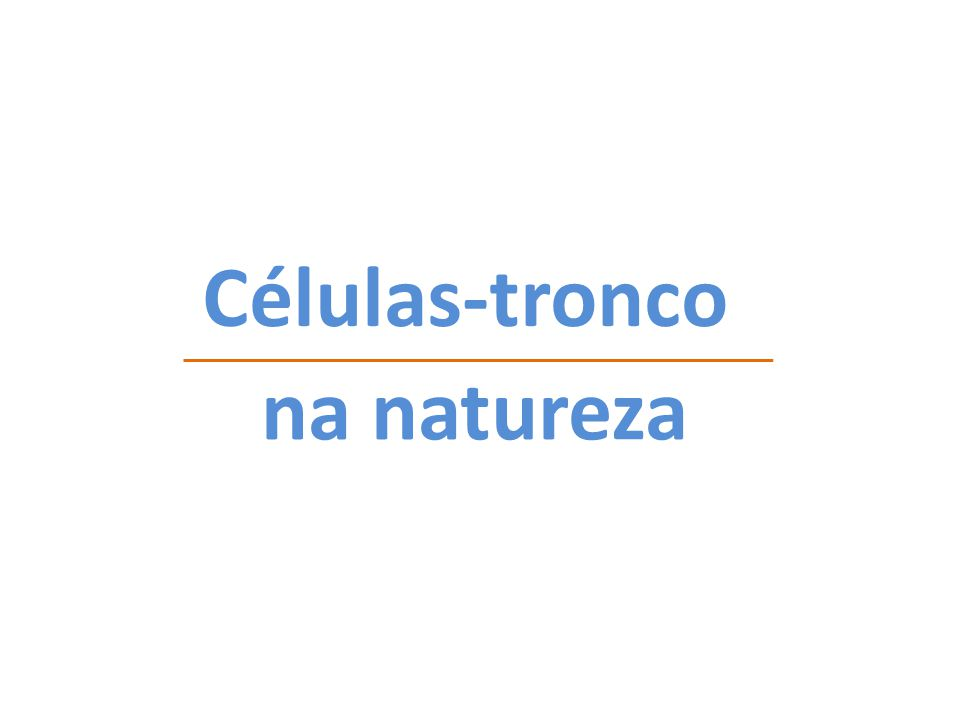 Células-tronco na natureza