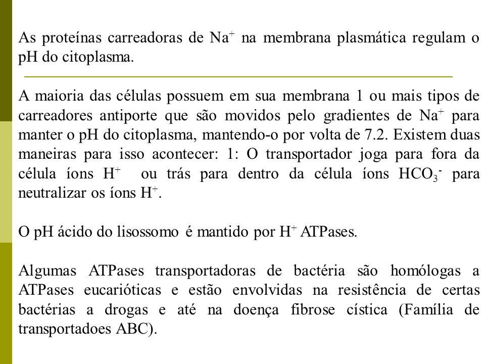 As proteínas carreadoras de Na + na membrana plasmática regulam o pH do citoplasma. A maioria das células possuem em sua membrana 1 ou mais tipos de c