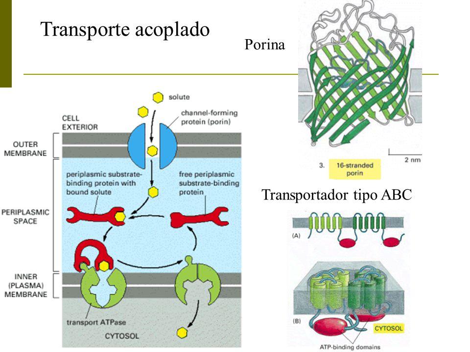 Transporte acoplado Porina Transportador tipo ABC