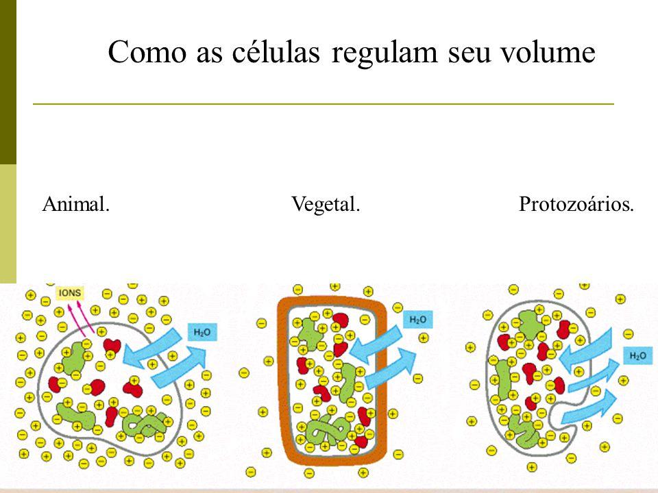 Como as células regulam seu volume Animal.Vegetal.Protozoários.