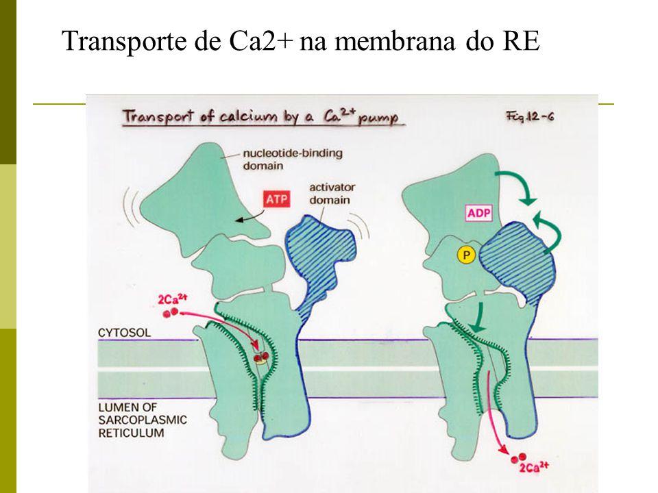 Transporte de Ca2+ na membrana do RE