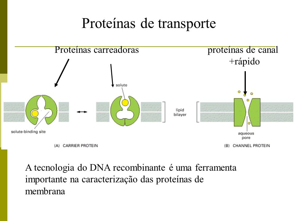 Tipos de transporte através das membranas Proteínas Carreadoras – Transporte seletivo Proteínas carreadoras e Proteínas de canal