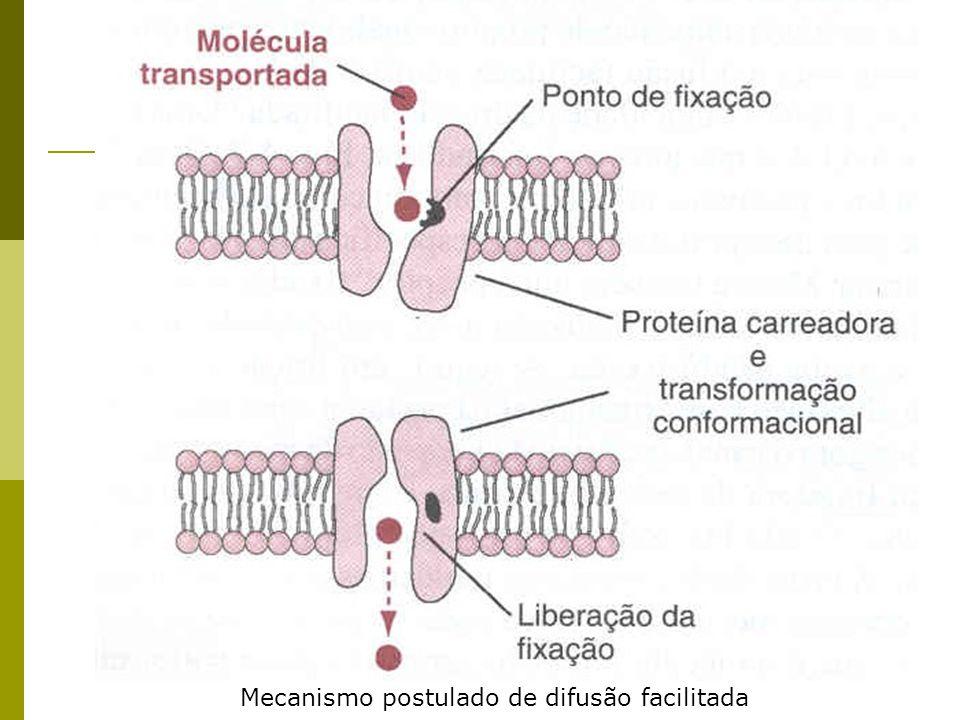 CONCENTRAÇÕES IÔNICAS DENTRO E FORA DA CÉLULA Íons abundantes no meio celular: sódio, potássio, cálcio, cloro e hidrogênio (prótons) Bombeamento de íons para o meio extracelular ajuda na pressão osmótica ComponenteConcentração intracelular (mM) Concentração extracelular (mM) Cátions Na+ 5 – 15145 K + 1405 Mg + 0,51 – 2 10 7 1 – 2 H + 7x 10 5 (10 -7,2 M ou pH 7,4)4x 10 5 (10 -7,4 M ou pH 7,4) Ânions Cl - 5 - 15110 Ânions fixosalta0