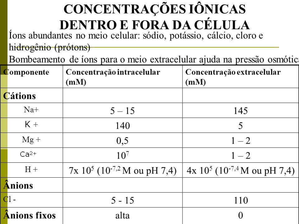 CONCENTRAÇÕES IÔNICAS DENTRO E FORA DA CÉLULA Íons abundantes no meio celular: sódio, potássio, cálcio, cloro e hidrogênio (prótons) Bombeamento de ío