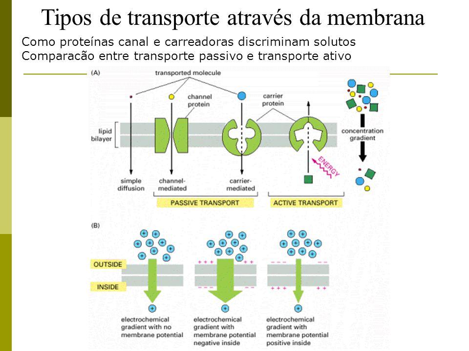 Tipos de transporte através da membrana Como proteínas canal e carreadoras discriminam solutos Comparacão entre transporte passivo e transporte ativo