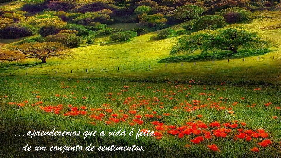 ...aprenderemos que a vida é feita de um conjunto de sentimentos, sensações e momentos...