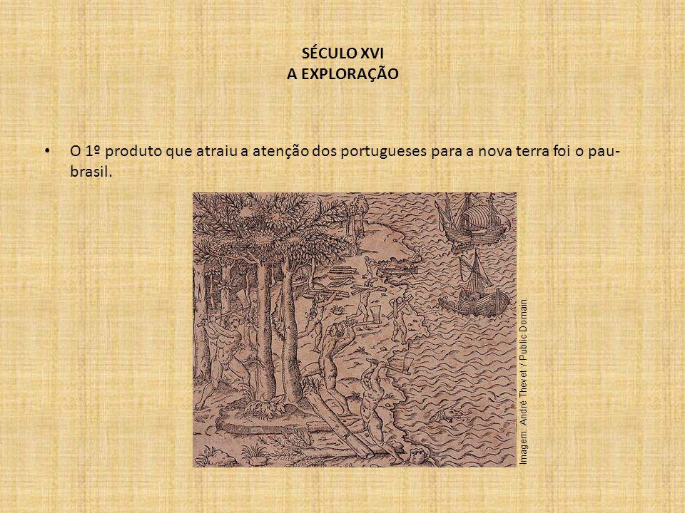 SÉCULO XVI A EXPLORAÇÃO O 1º produto que atraiu a atenção dos portugueses para a nova terra foi o pau- brasil. Imagem: André Thevet / Public Domain.