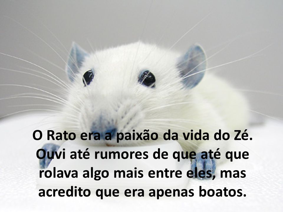 O Rato era a paixão da vida do Zé. Ouvi até rumores de que até que rolava algo mais entre eles, mas acredito que era apenas boatos.