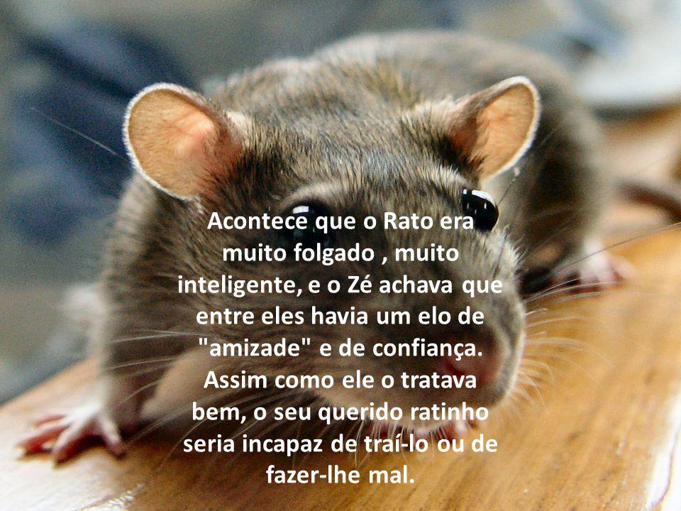Acontece que o Rato era muito folgado, muito inteligente, e o Zé achava que entre eles havia um elo de