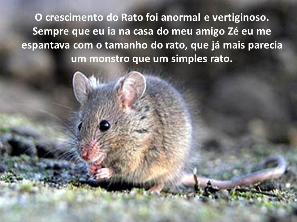 O crescimento do Rato foi anormal e vertiginoso. Sempre que eu ia na casa do meu amigo Zé eu me espantava com o tamanho do rato, que já mais parecia u