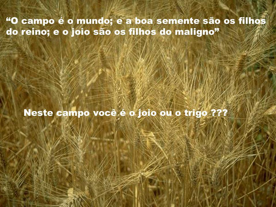 Neste campo você é o joio ou o trigo ??? O campo é o mundo; e a boa semente são os filhos do reino; e o joio são os filhos do maligno