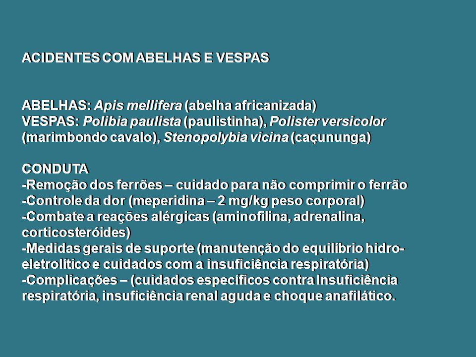ACIDENTES COM ABELHAS E VESPAS ABELHAS: Apis mellifera (abelha africanizada) VESPAS: Polibia paulista (paulistinha), Polister versicolor (marimbondo c