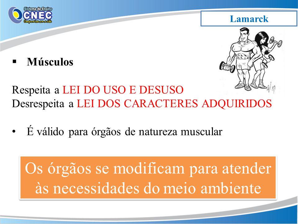 Lamarck Os órgãos se modificam para atender às necessidades do meio ambiente Músculos Respeita a LEI DO USO E DESUSO Desrespeita a LEI DOS CARACTERES ADQUIRIDOS É válido para órgãos de natureza muscular