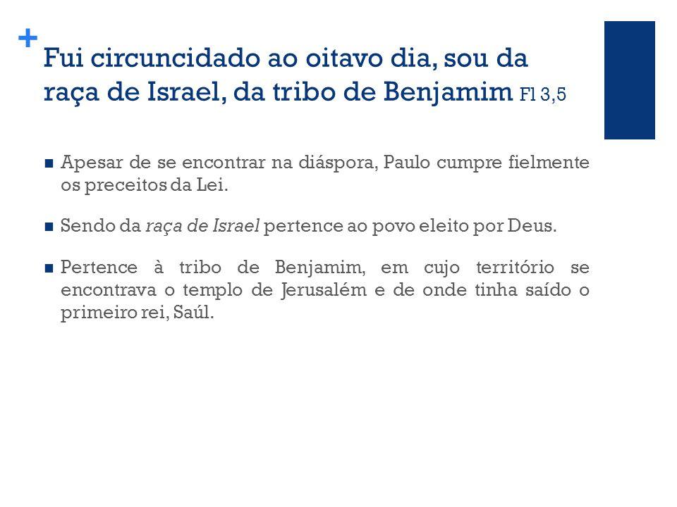 + Fui circuncidado ao oitavo dia, sou da raça de Israel, da tribo de Benjamim Fl 3,5 Apesar de se encontrar na diáspora, Paulo cumpre fielmente os preceitos da Lei.