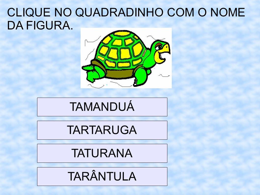 CLIQUE NO QUADRADINHO COM O NOME DA FIGURA. TAMANDUÁ TARTARUGA TARÂNTULA TATURANA