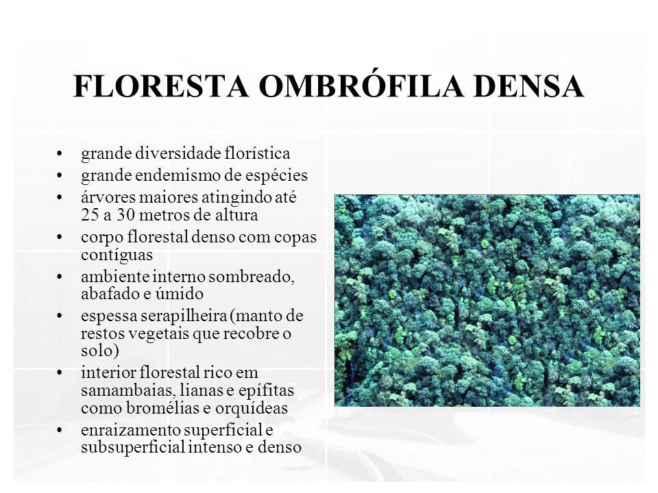 FLORESTA OMBRÓFILA DENSA grande diversidade florística grande endemismo de espécies árvores maiores atingindo até 25 a 30 metros de altura corpo flore