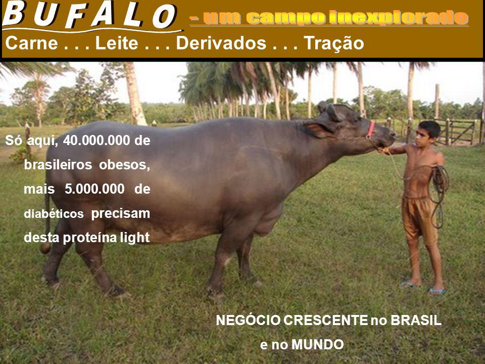 Búfalo Precoce Como ocorre com outros bovinos, o ideal é o abate de búfalos precoces com idade em torno de 18 a 24 meses, quando alcançam bom acabamento, pesando em média, de 450 a 500 kg.