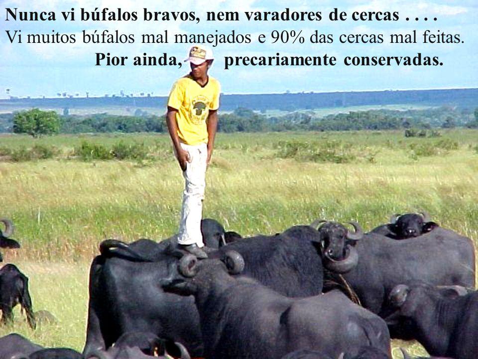 O búfalo tem as mesmas doenças do outro bovino, porém em menor escala. Como exemplo, a desverminação se faz até os dois anos de idade. Daí para frente