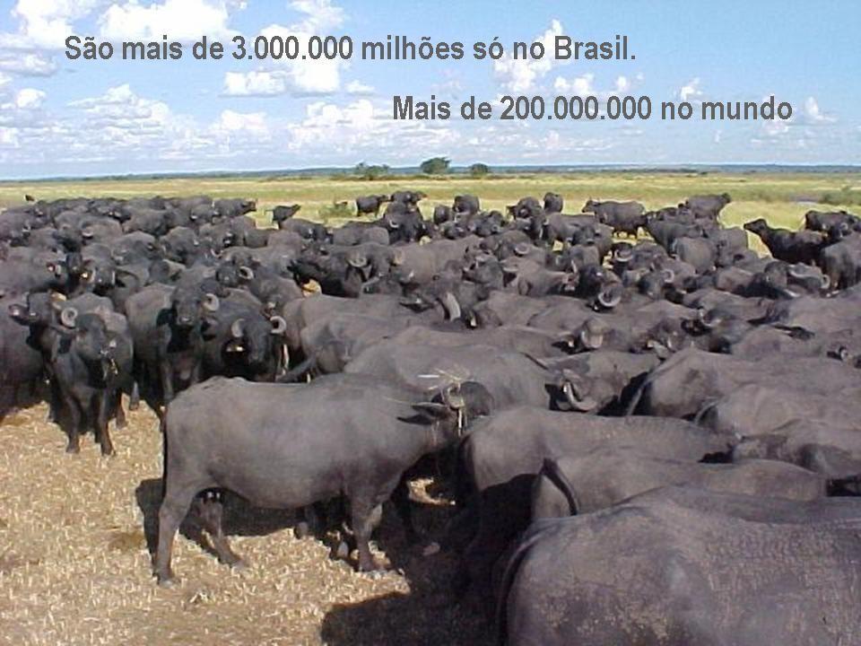 Se pesa 500 kg. carrega ½ tonelada (Fonte: Exército do Amazonas BR)