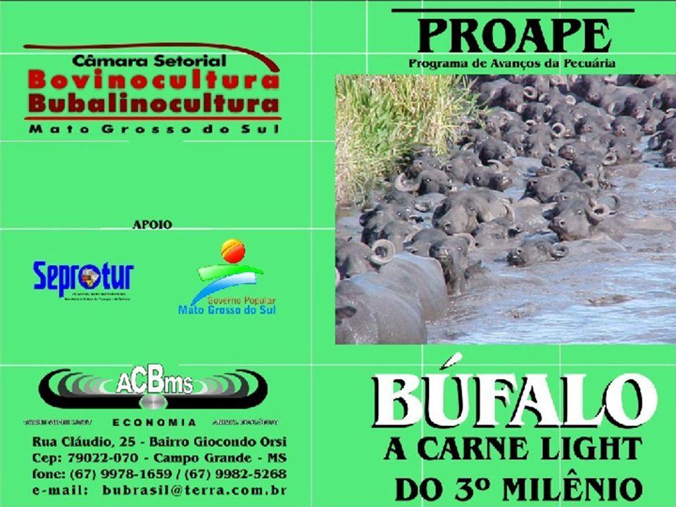 MurrahJafarabadiCarabau Mediterrâneo E este é o búfalo brasileiro, resultante das demais raças. Deve ser descornado e ter boa conformação física. 769