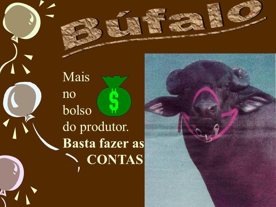 MurrahJafarabadiCarabau Mediterrâneo E este é o búfalo brasileiro, resultante das demais raças.