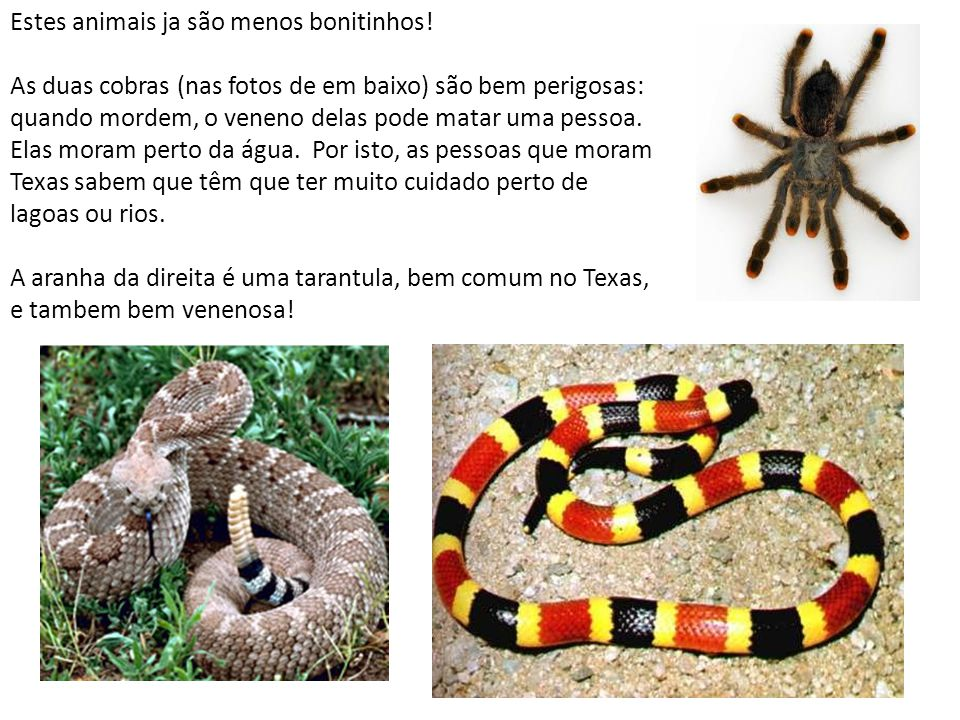 Estes animais ja são menos bonitinhos! As duas cobras (nas fotos de em baixo) são bem perigosas: quando mordem, o veneno delas pode matar uma pessoa.