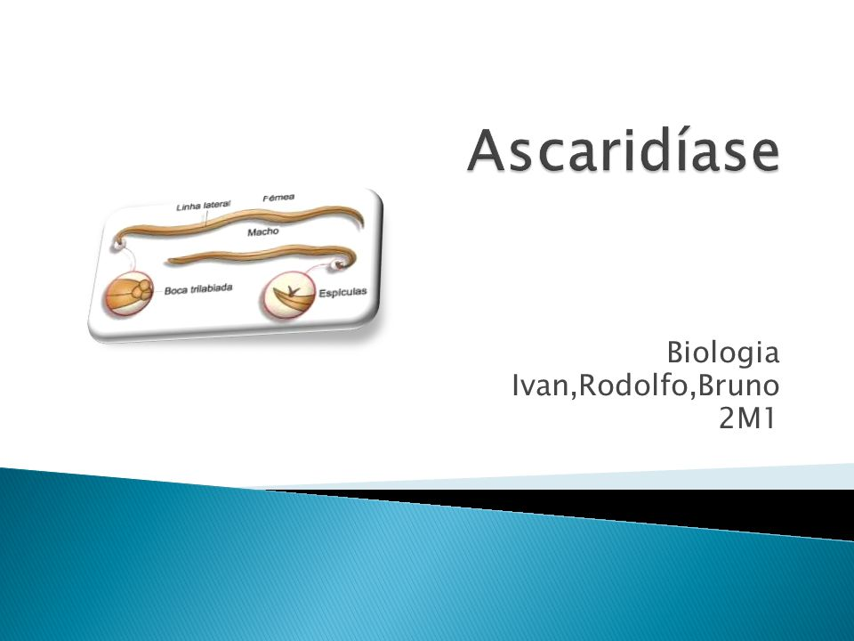 Biologia Ivan,Rodolfo,Bruno 2M1