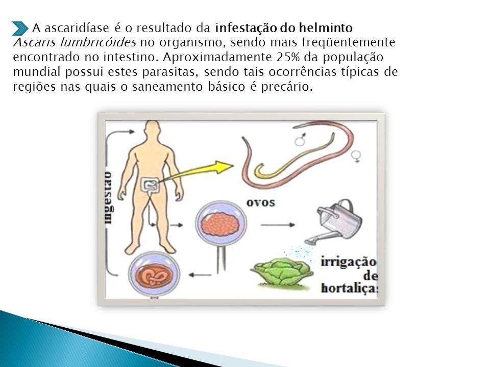 A ascaridíase é o resultado da infestação do helminto Ascaris lumbricóides no organismo, sendo mais freqüentemente encontrado no intestino.