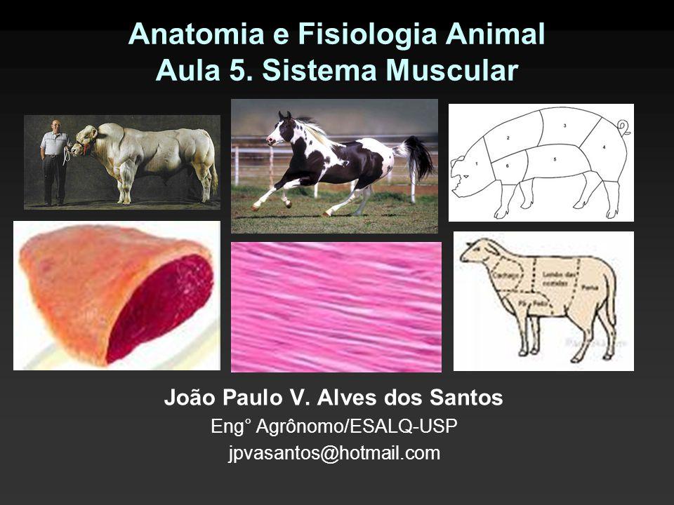 Anatomia e Fisiologia Animal Aula 5. Sistema Muscular João Paulo V. Alves dos Santos Eng° Agrônomo/ESALQ-USP jpvasantos@hotmail.com