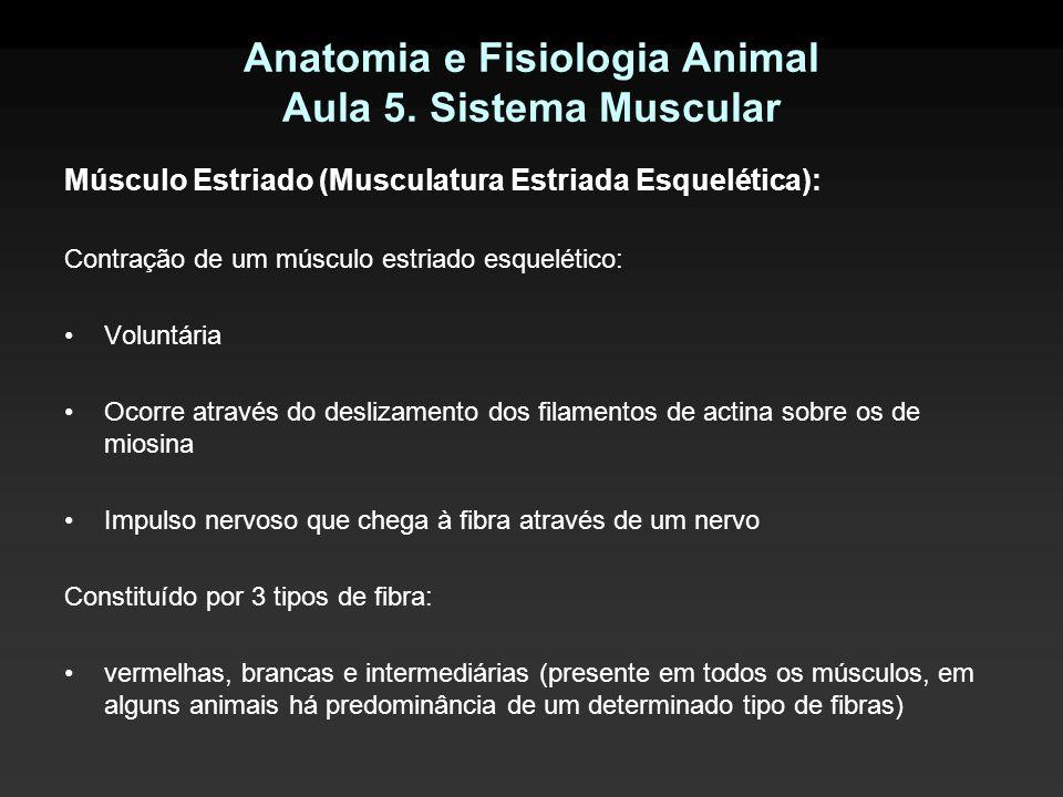 Anatomia e Fisiologia Animal Aula 5. Sistema Muscular Músculo Estriado (Musculatura Estriada Esquelética): Contração de um músculo estriado esquelétic