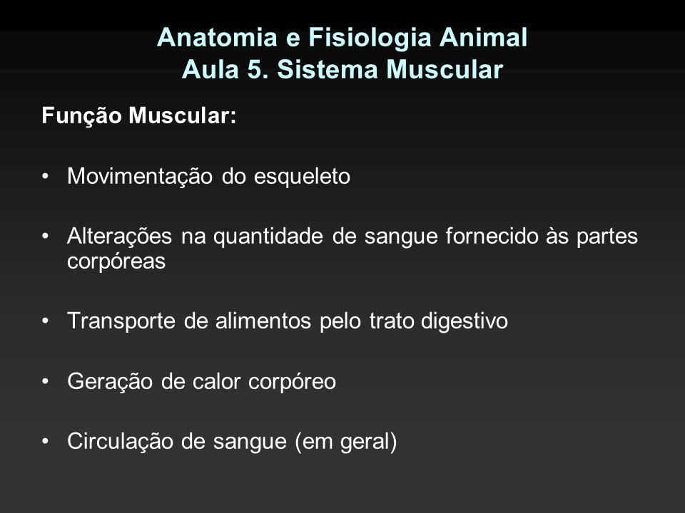 Anatomia e Fisiologia Animal Aula 5. Sistema Muscular Função Muscular: Movimentação do esqueleto Alterações na quantidade de sangue fornecido às parte