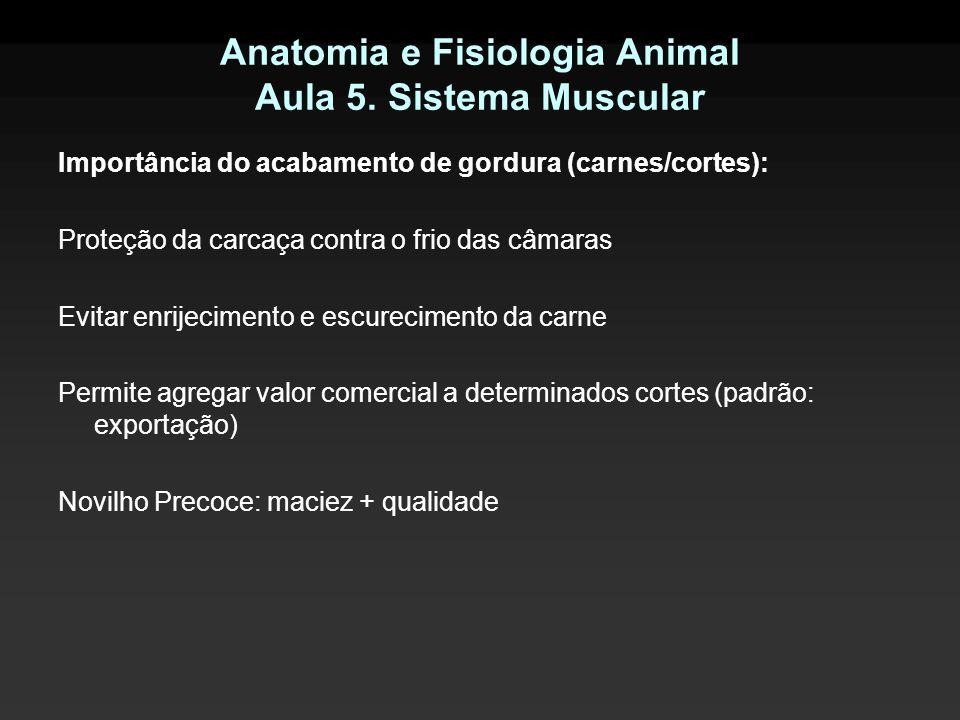 Anatomia e Fisiologia Animal Aula 5. Sistema Muscular Importância do acabamento de gordura (carnes/cortes): Proteção da carcaça contra o frio das câma