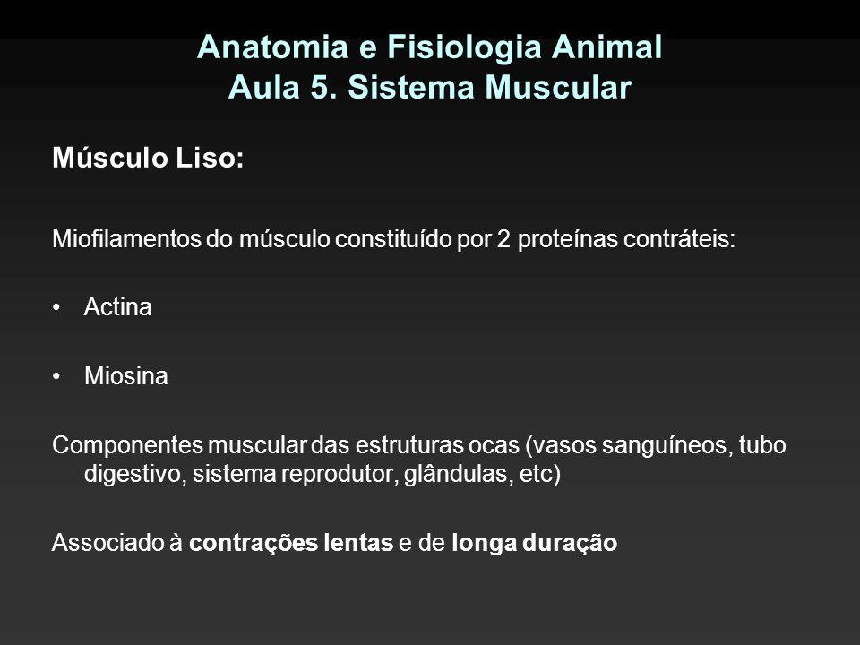 Anatomia e Fisiologia Animal Aula 5. Sistema Muscular Músculo Liso: Miofilamentos do músculo constituído por 2 proteínas contráteis: Actina Miosina Co