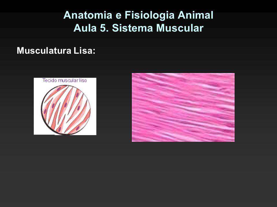 Anatomia e Fisiologia Animal Aula 5. Sistema Muscular Musculatura Lisa: