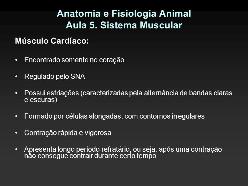 Anatomia e Fisiologia Animal Aula 5. Sistema Muscular Músculo Cardíaco: Encontrado somente no coração Regulado pelo SNA Possui estriações (caracteriza