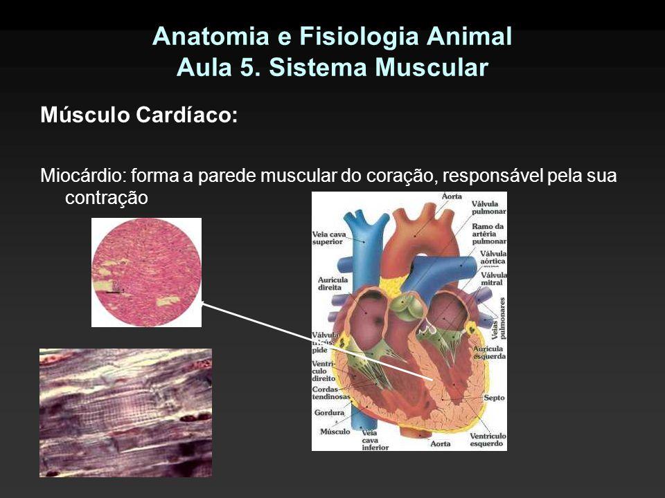 Anatomia e Fisiologia Animal Aula 5. Sistema Muscular Músculo Cardíaco: Miocárdio: forma a parede muscular do coração, responsável pela sua contração