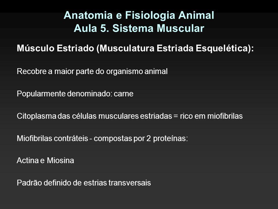 Anatomia e Fisiologia Animal Aula 5. Sistema Muscular Músculo Estriado (Musculatura Estriada Esquelética): Recobre a maior parte do organismo animal P