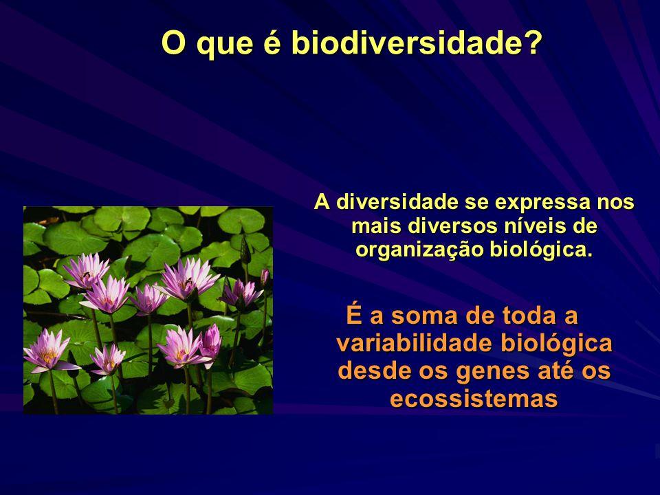 Conceitos: a diversidade ecológica no nível das espécies A diversidade é um dos principais componentes e descritores da estrutura das comunidades biológicas As duas comunidades ao lado têm a mesma diversidade?