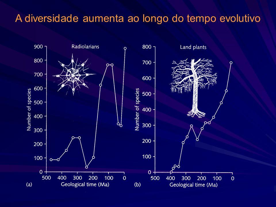 A diversidade aumenta com a profundidade: pico de riqueza de invertebrados bentônicos: ~ 2000 m (=limite do talude continental)