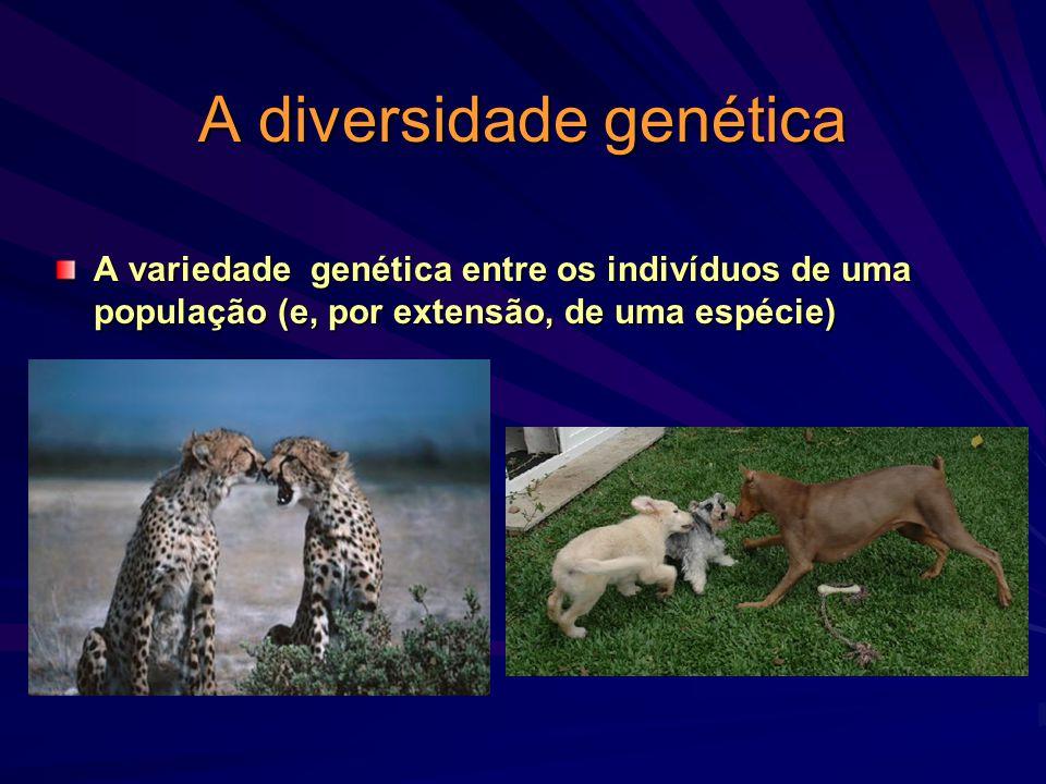 A diversidade genética A variedade genética entre os indivíduos de uma população (e, por extensão, de uma espécie)