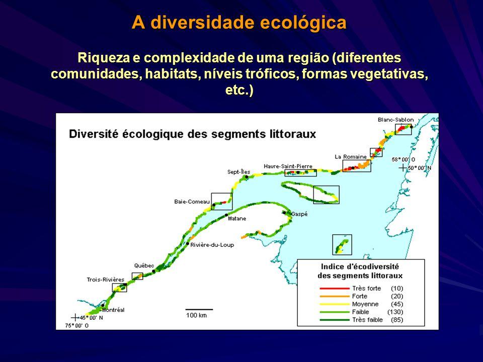 A diversidade tende a ser maior em direção ao Equador ou áreas subtropicais, tanto em ambientes continentais como marinhos rasos