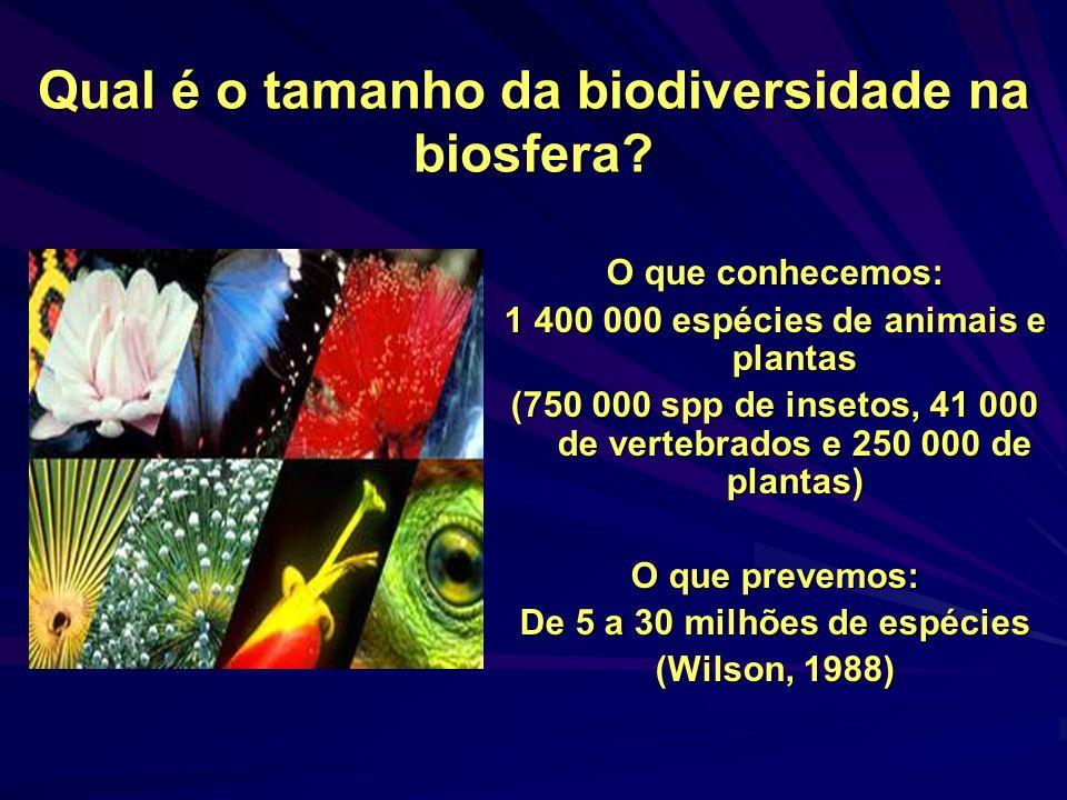 A diversidade específica Número e equitabilidade de espécies (a mais comumente discutida e estudada)
