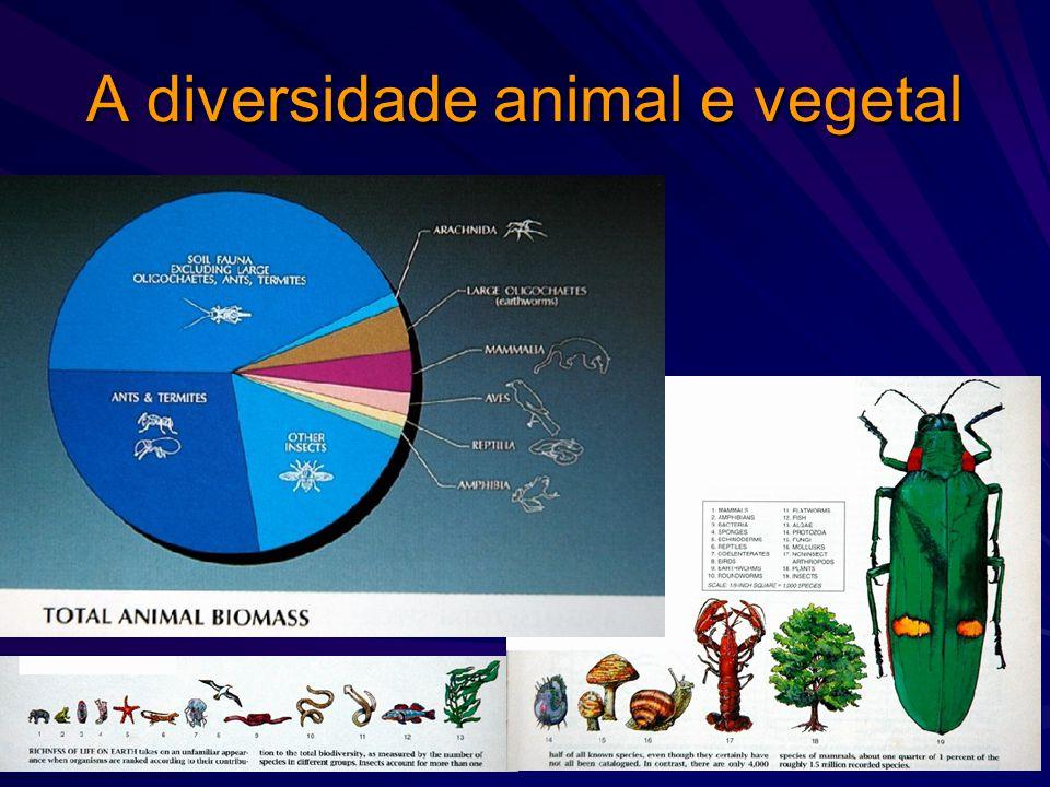 Qual é o tamanho da biodiversidade na biosfera? O que conhecemos: 1 400 000 espécies de animais e plantas (750 000 spp de insetos, 41 000 de vertebrad