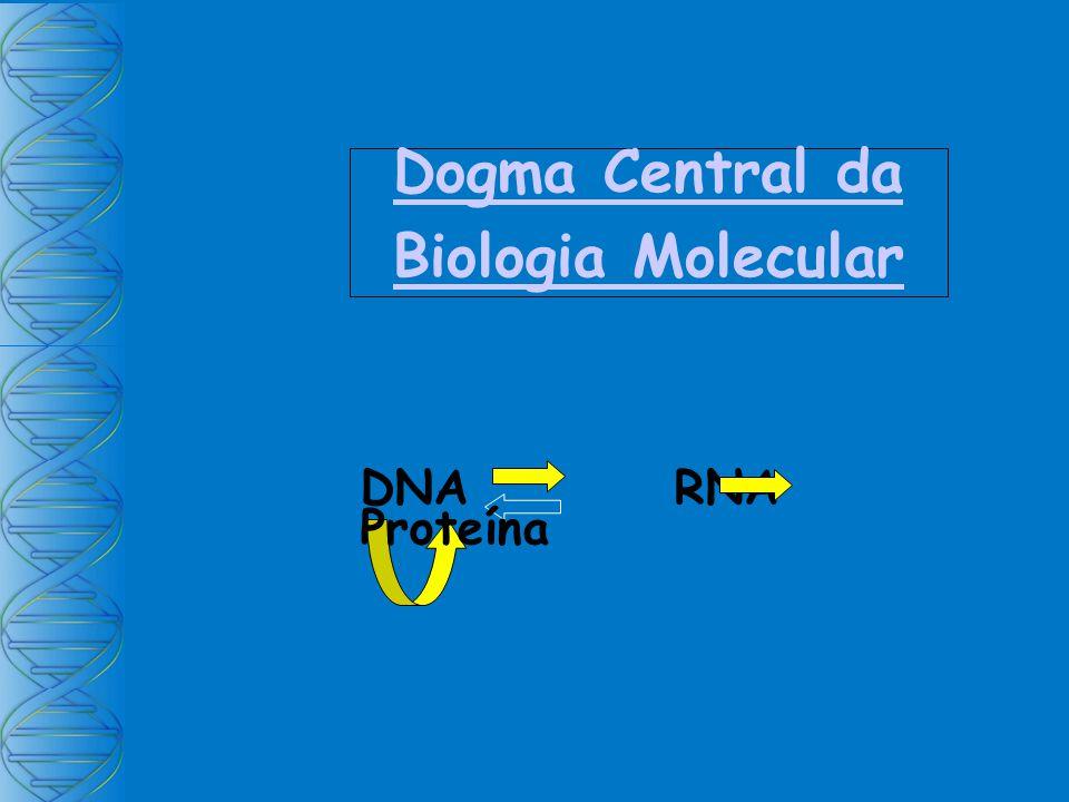Dogma Central da Biologia Molecular DNA RNA Proteína
