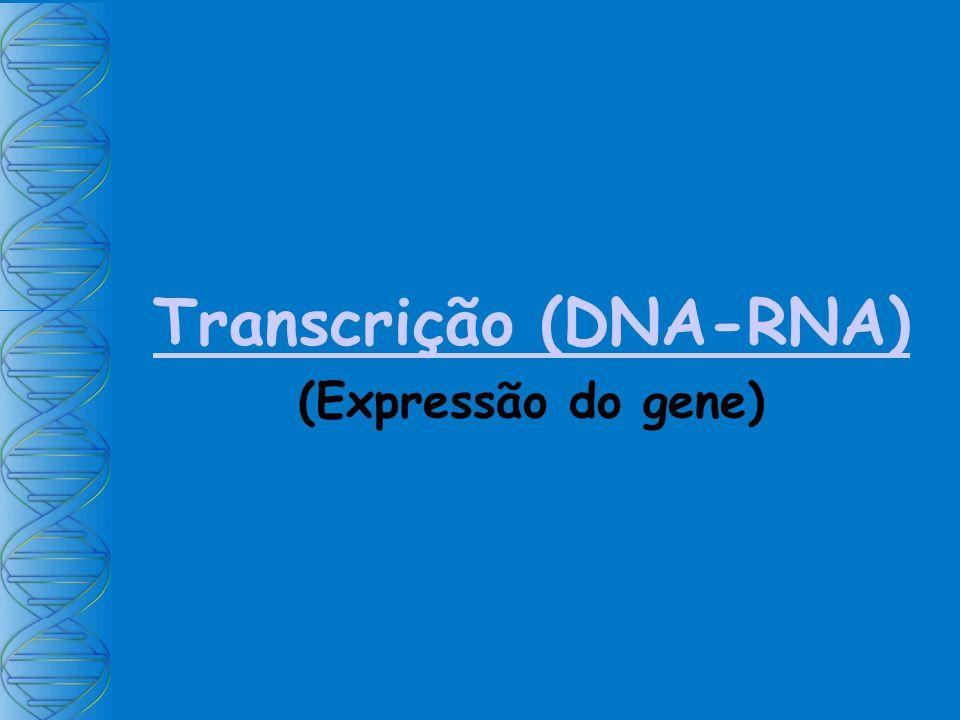Transcrição (DNA-RNA) (Expressão do gene)