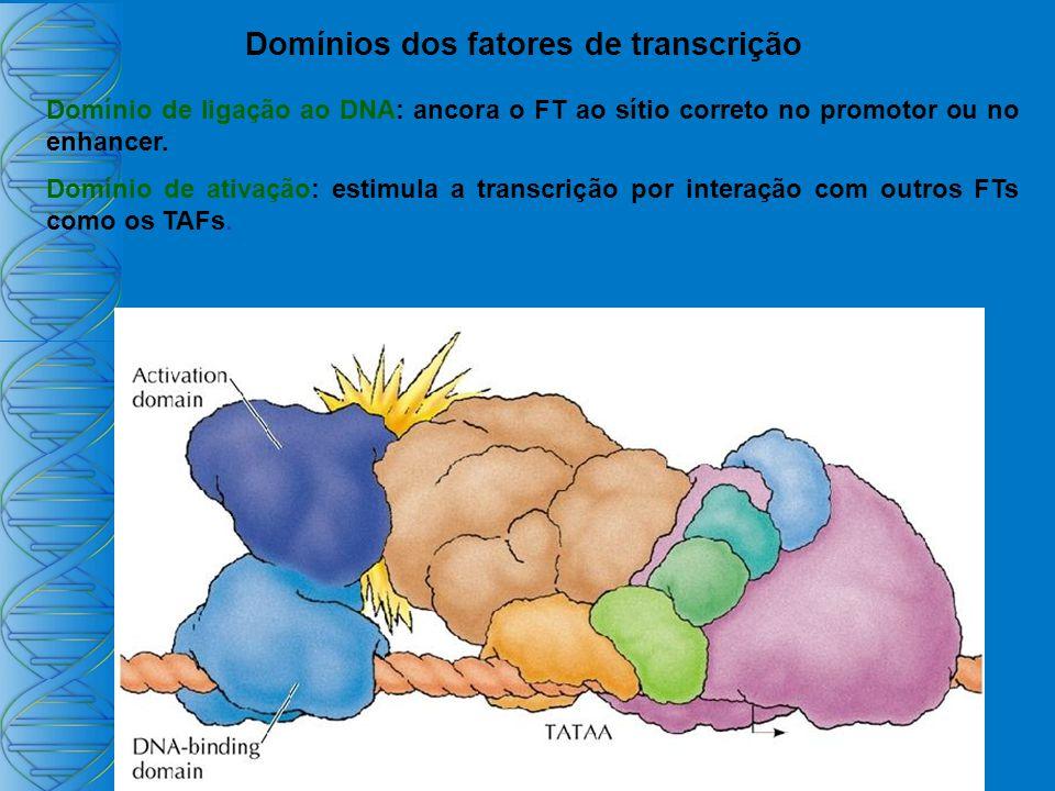 Domínios dos fatores de transcrição Domínio de ligação ao DNA: ancora o FT ao sítio correto no promotor ou no enhancer.
