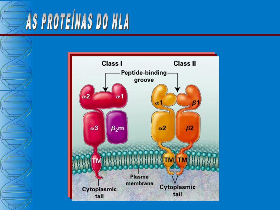 PREPARO DAS AMOSTRAS TRANSCRIÇÃO REVERSA REVERSA PCR PROPRIAMENTE DITO (mimetiza a duplicação) DETECÇÃO